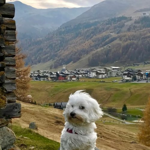 Willy ♥ San Rocco district from Via Contin Livigno