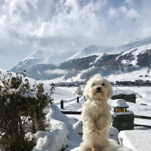 Willy ♥ Livigno - Panorama - San Rocco - Monte li Resa