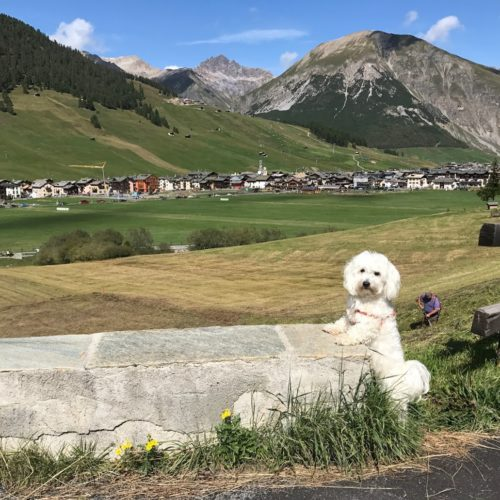 Willy ♥ shows the central part of Livigno