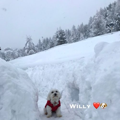 Willy ♥ shows how much snow