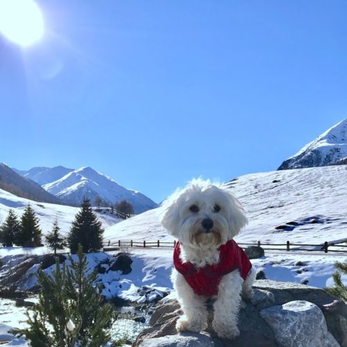 Willy ♥ on the Livigno cycle path