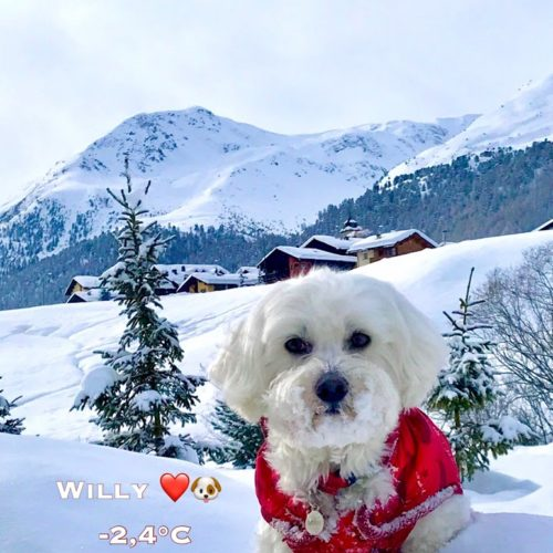Willy ♥ always with a snowy face