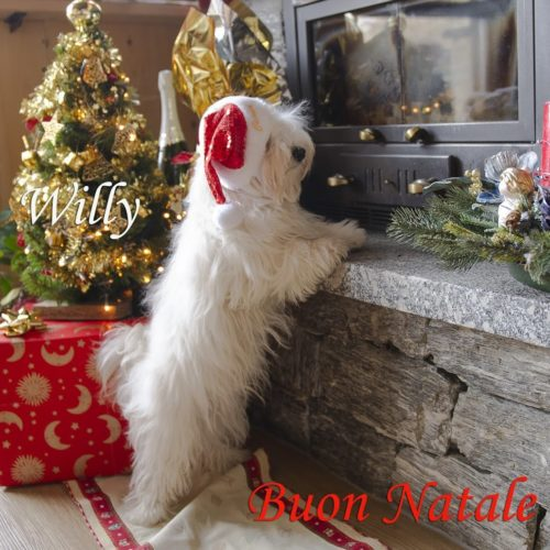 Willy ♥ celebrates Christmas