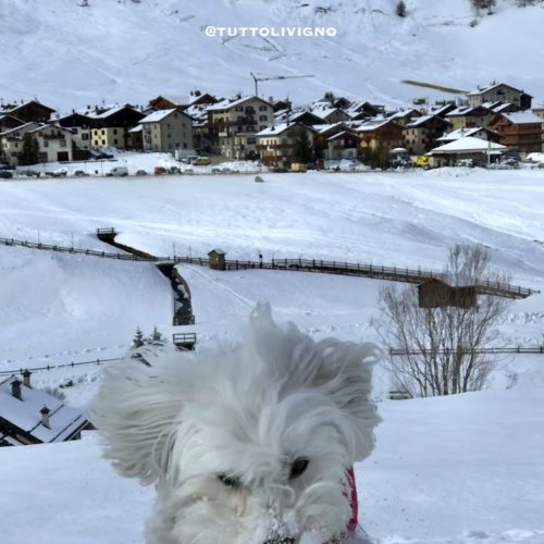 Willy ♥ powder snow and Via Rin