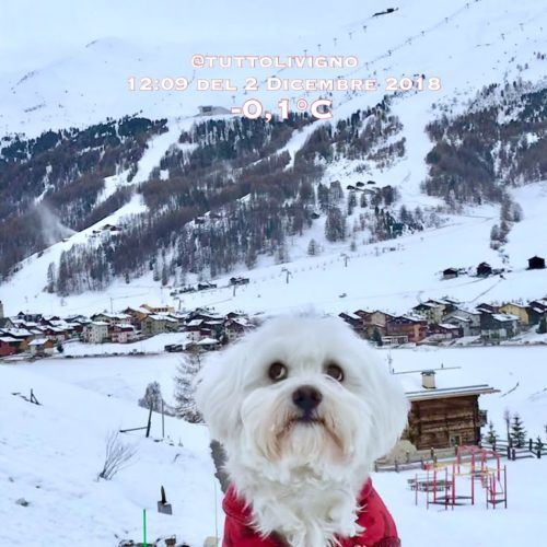Willy ♥ and the panorama of Livigno from Via Contin