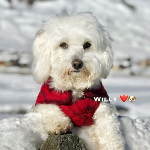 Willy ♥ in a beautiful portrait