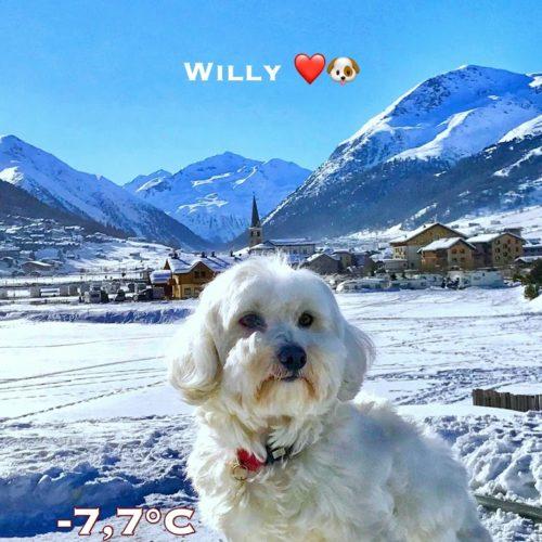 Willy ♥ Livigno - Santa Maria Livigno in the background