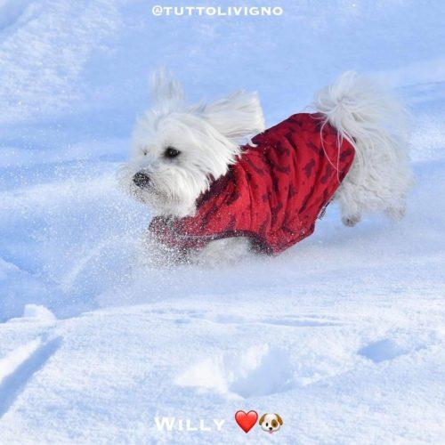 Willy ♥ - run in the freshly fallen snow