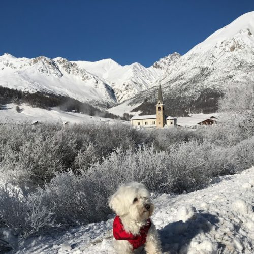 Willy ♥ Livigno - frozen country