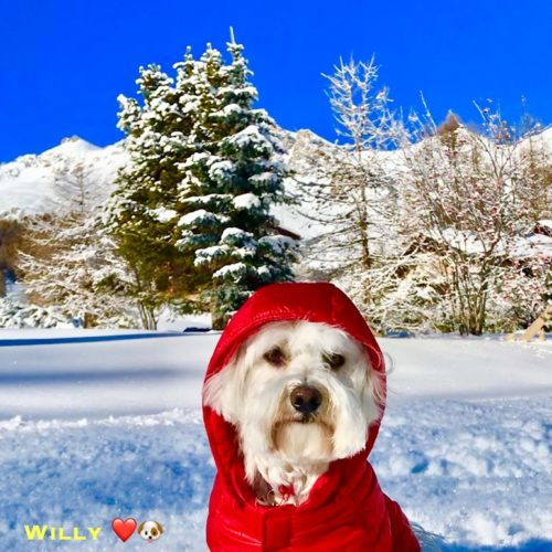 Willy ♥ Livigno only color