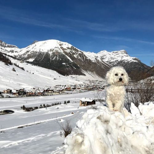 Willy ♥ and the whitewashed mountains of Livigno