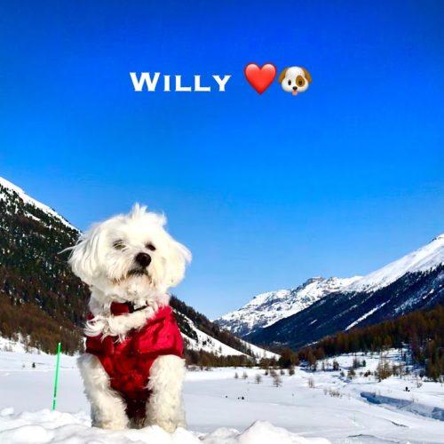 Willy ♥ Livigno - 2020 02 09