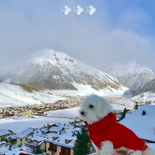 Willy ♥ the sentinel of the snows