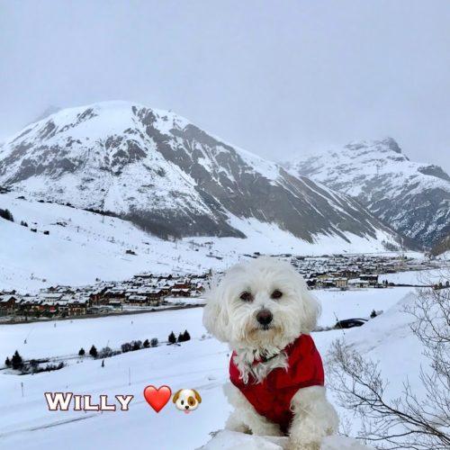 Willy ♥ Livigno 2020 02 19