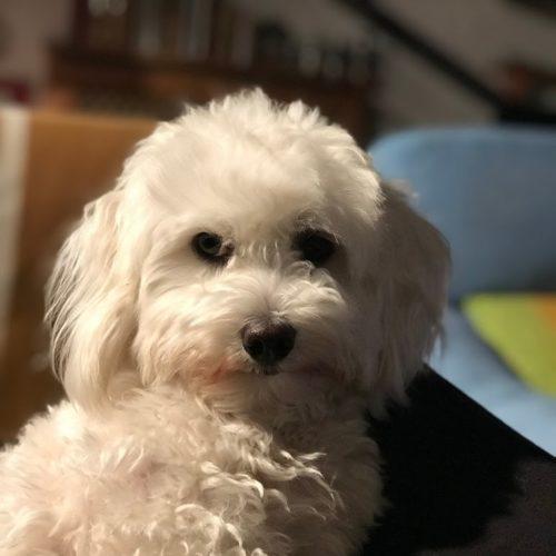 Willy ♥ a puppy portrait