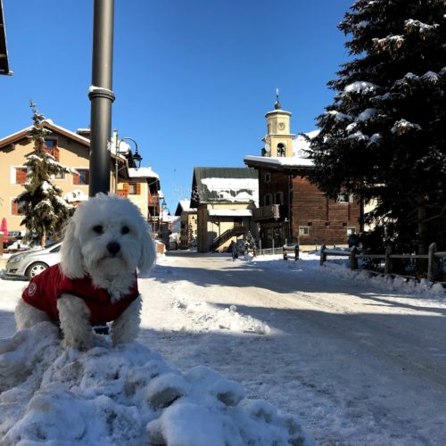 Willy ♥ in via Sant'Antonio, in the center of Livigno