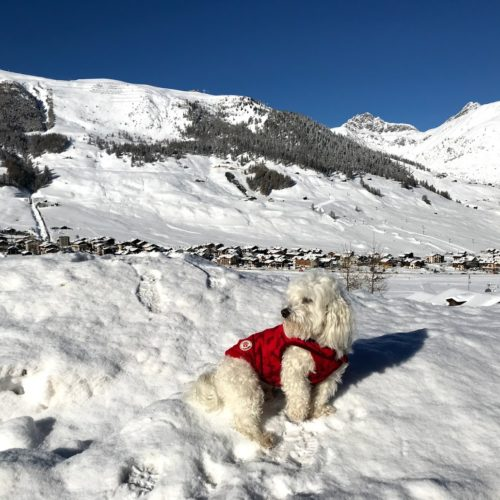 Willy ♥ of course, Livigno is beautiful