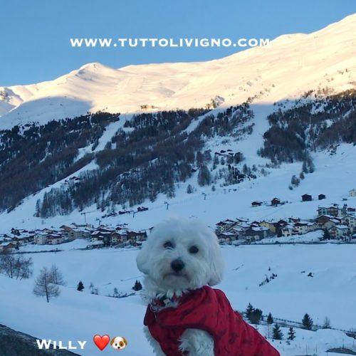 Willy ♥ Livigno
