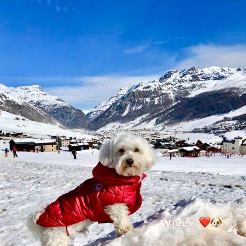 Willy ♥ on the ski slopes
