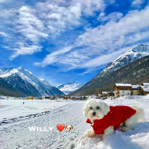 Willy ♥ in the Florino area in Livigno