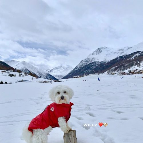 Willy ♥ on the plain of the Livigno valley