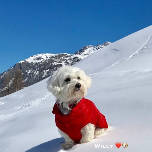 Willy ♥ a beautiful close-up on Livigno sky