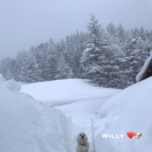 Willy ♥ Livigno as a yardstick