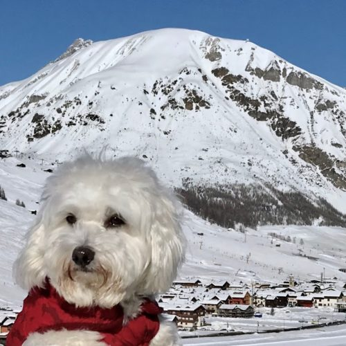 Willy ♥ portrait on the background of Livigno
