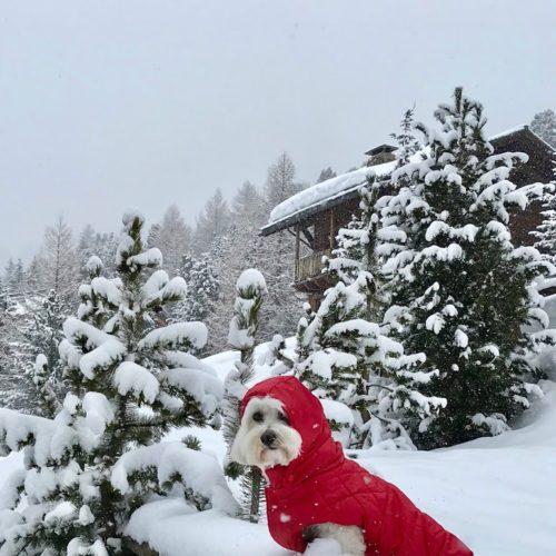 Willy ♥ April 14, still snow