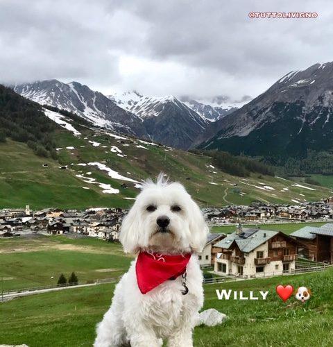 Buona Domenica da Willy♥