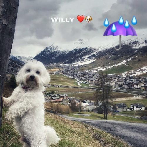 Willy ♥ Sunday in the rain