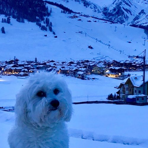 Willy ♥ a winter photo at dusk