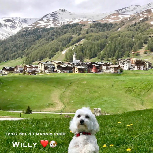 Willy ♥ 2020 05 17