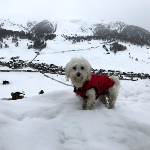 Willy ♥ running in the wet snow