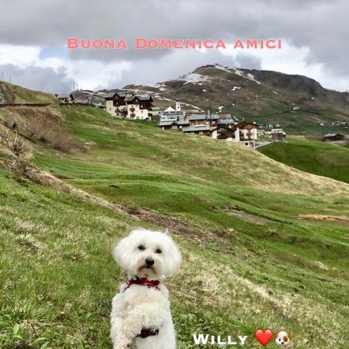 Willy ♥ in Trepalle - Hamlet of Livigno