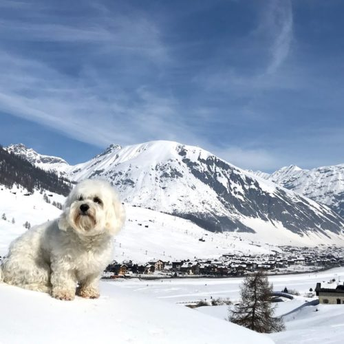 Willy ♥ you can clearly see the long row of houses in Livigno