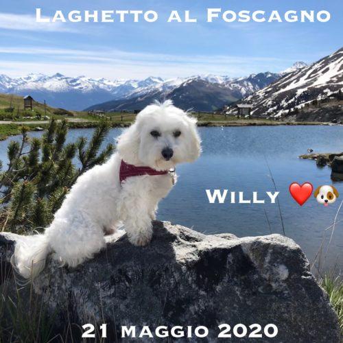 Willy ♥  al Foscagno