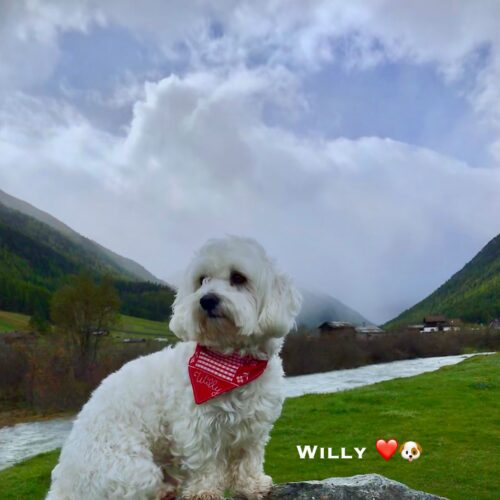 willy_04-10-20