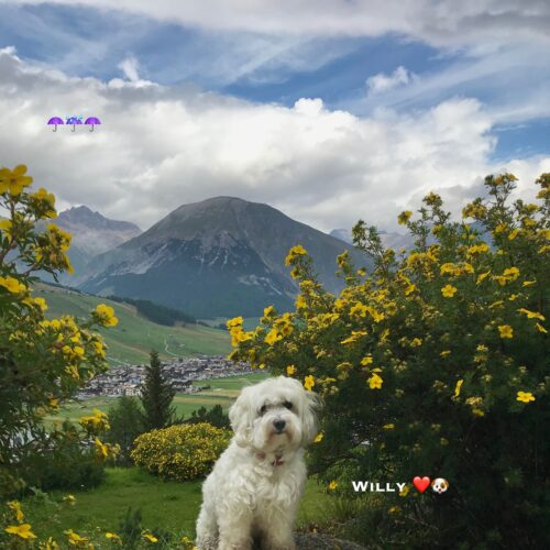 willy_06_09_20