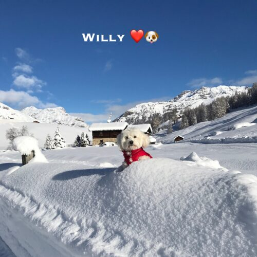 willy_13-12-20
