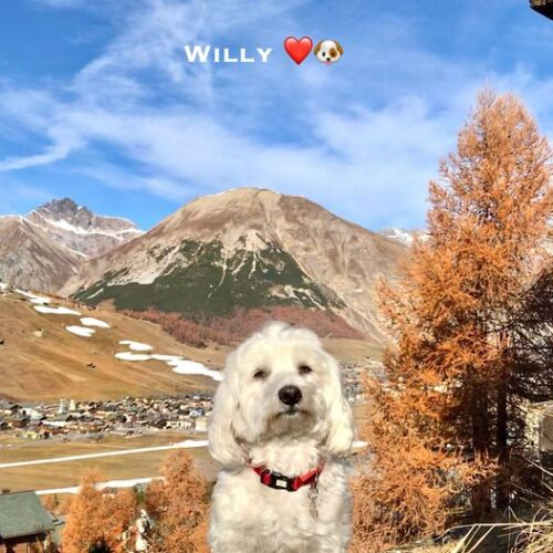 willy_15_11_20