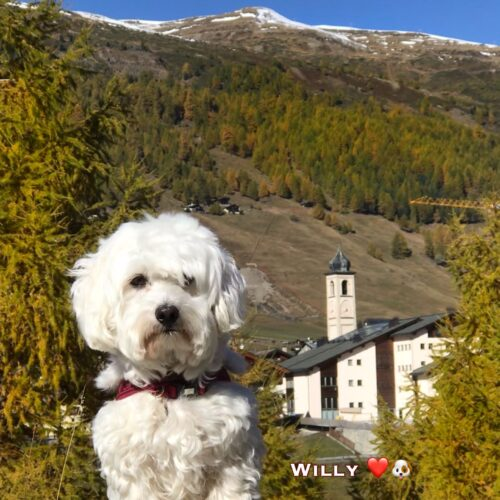willy_18-09-20