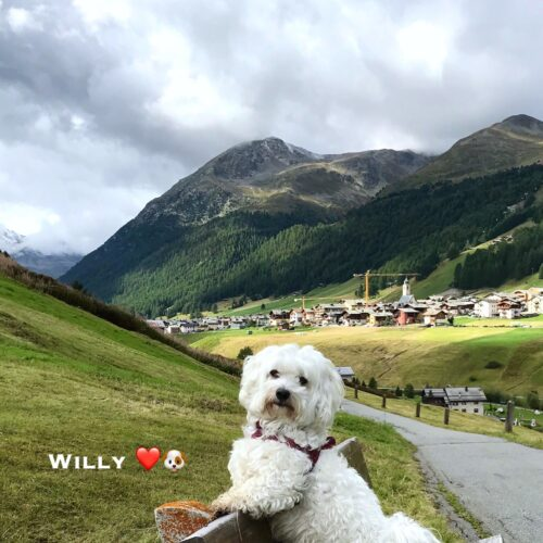 willy_2-09-20