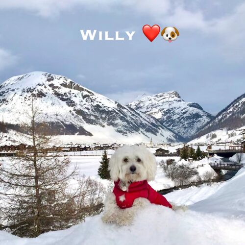 willy_20-12-20