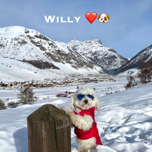 willy_27_12_20