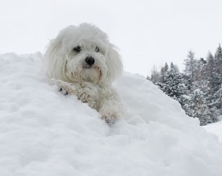 Willy ♥ happy in her beloved snow