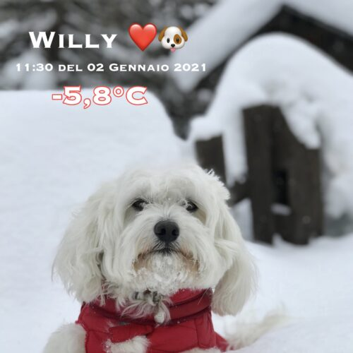 willy_02_01_2021