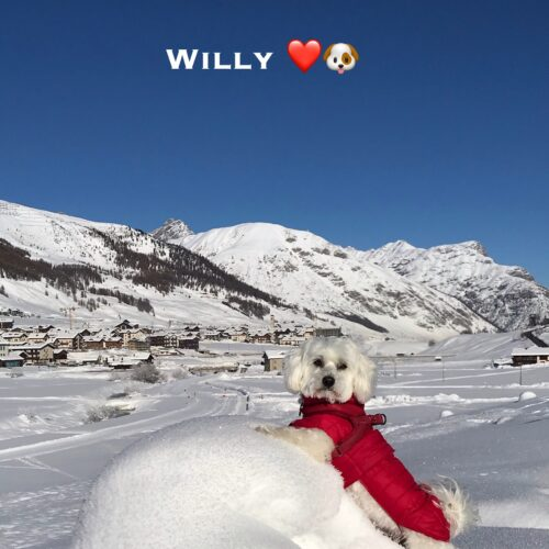 willy_10-01-21