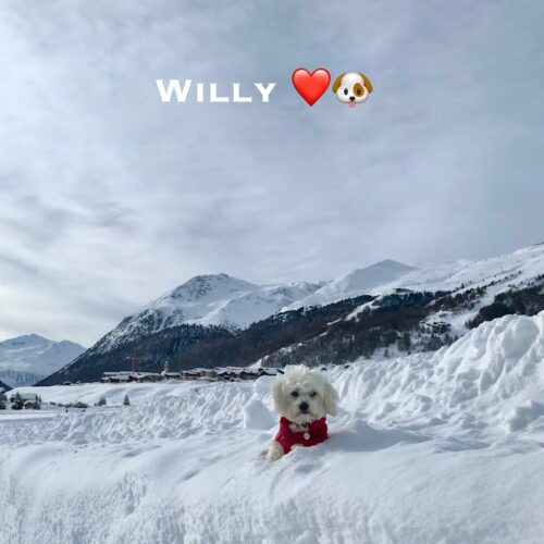 willy_24-01-21
