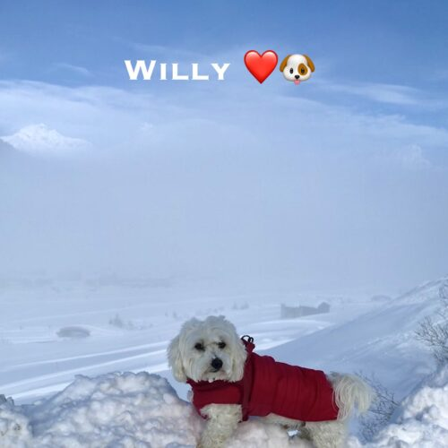 willy_31-01-21